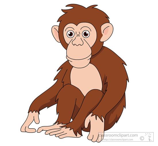 chimpanzee-910.jpg
