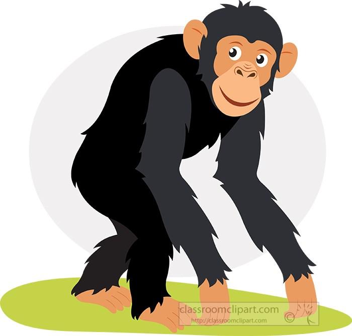 chimpanzee-walking-animal-vector-clipart.jpg