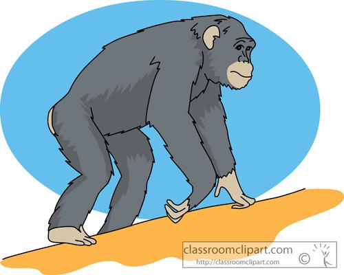 chimpanzee_630.jpg