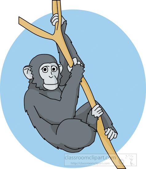 chimpanzee_in_tree01A.jpg