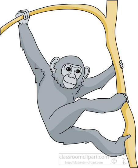 chimpanzee_tree_branch_03A.jpg