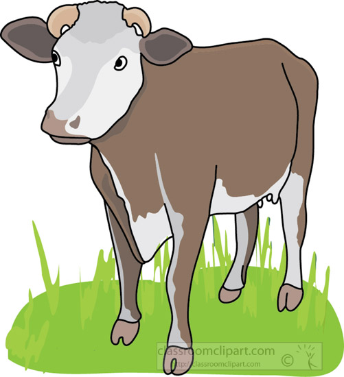 Cow_front_view_4A.jpg