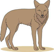 free coyote clipart clip art pictures graphics illustrations rh classroomclipart com coyote clip art coyote clip art free
