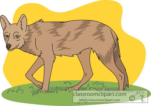 coyote_2613.jpg