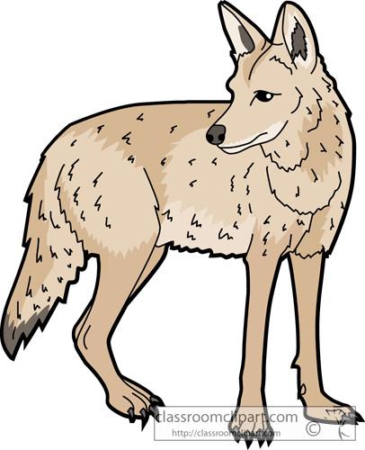 coyote_630.jpg