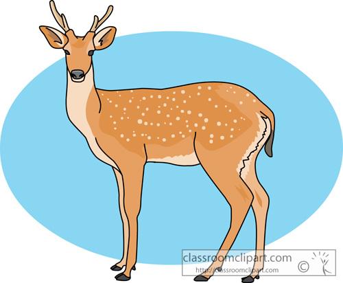 deer_730.jpg