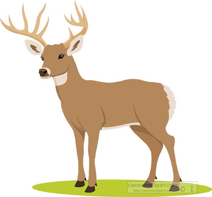 white-tail-deer-with-big-antlers.jpg