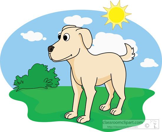 dog-on-grass-with-sky-sun.jpg
