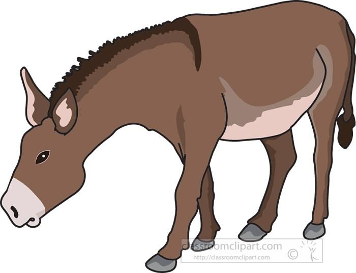 donkey-standing-all-fours.jpg