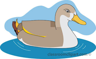 ducks_03_swimming_pond.jpg