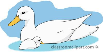 ducks_04_baby_mother_duck.jpg