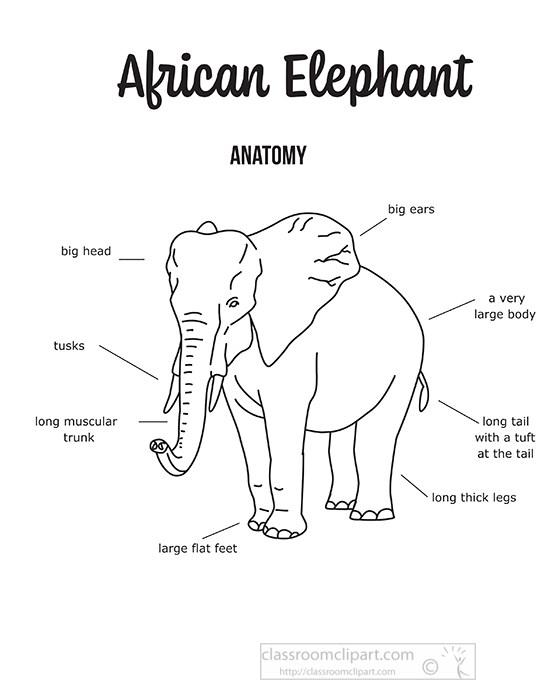 african-elephant-external-anatomy-black-outline-clipart.jpg