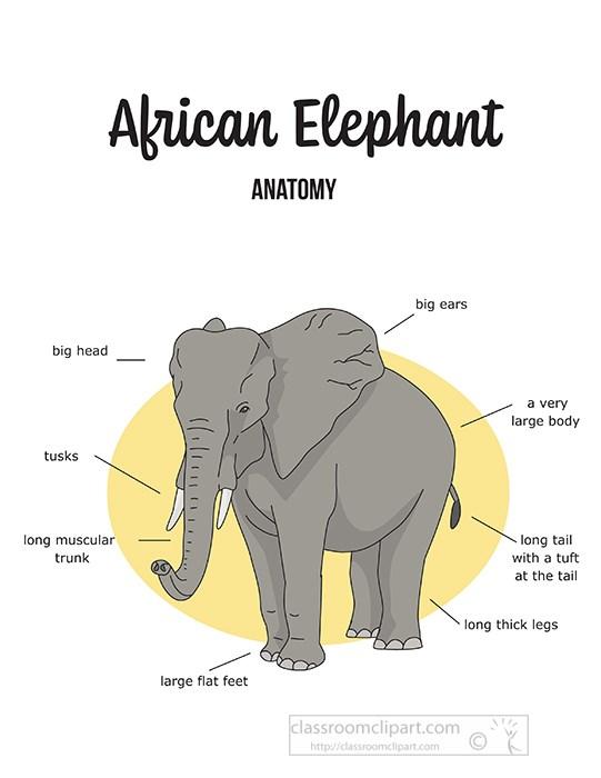 african-elephant-external-anatomy-color-clipart.jpg