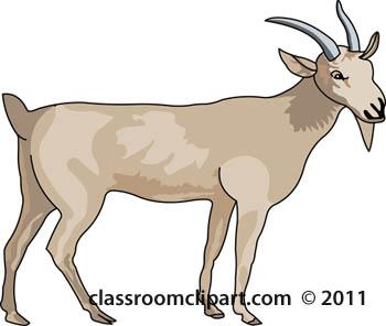 billy-goat-animal.jpg