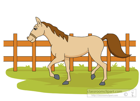 farm -animal-horse-966.jpg