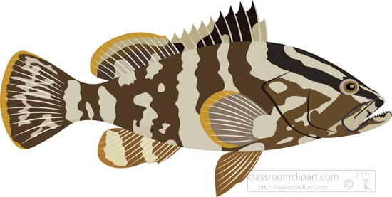 grouper-fish-clipart.jpg
