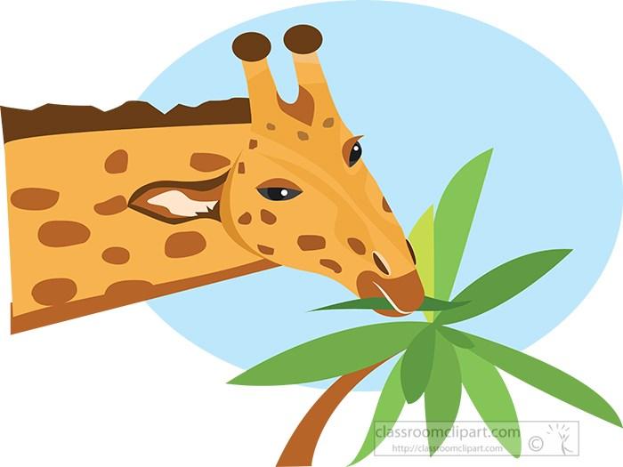 giraffe-stretching-neck-to-reach-plant-leaf.jpg