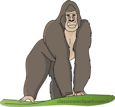 Gorilla_03A_4112.jpg