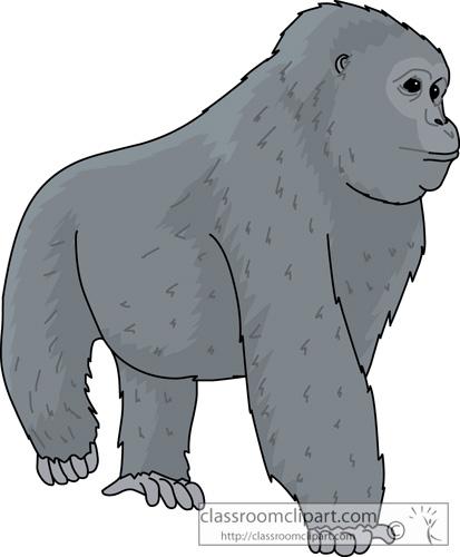 gorilla_72013.jpg