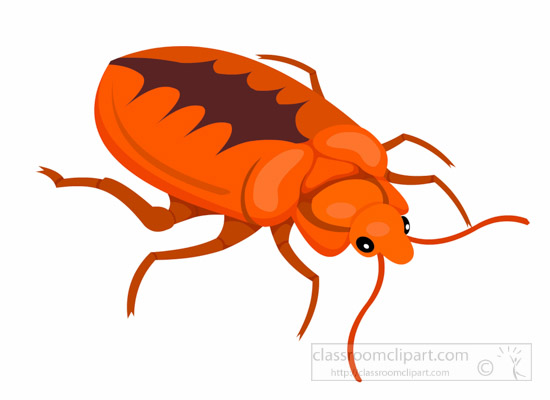 bed-bug-insect-clipart.jpg