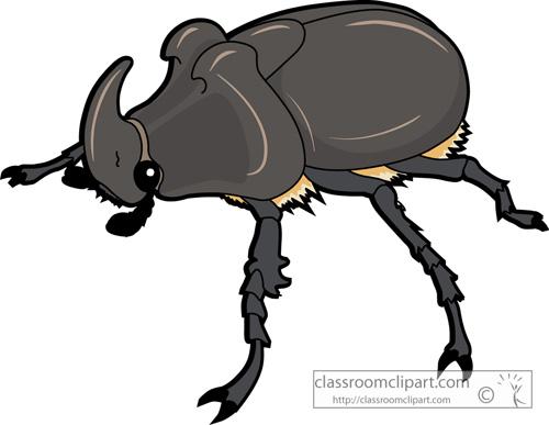 beetles_rhinoceros_beetle_726.jpg