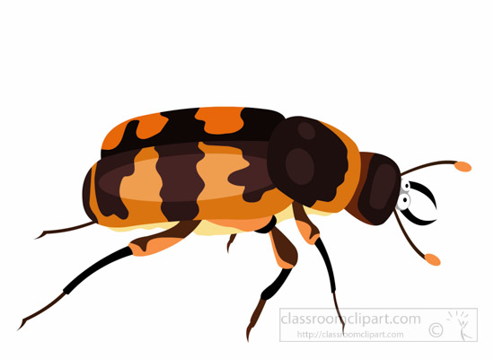 burying-beetle-insect-clipart.jpg
