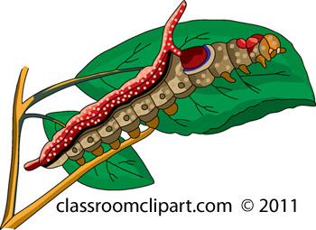 caterpillar_711_17A.jpg