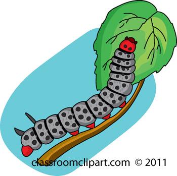 caterpillar_711_21A.jpg