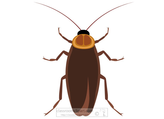 cockroach-insect-clipart-718.jpg