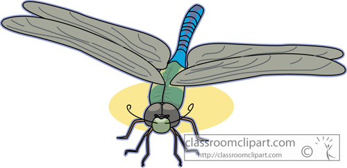 dragonflies_green_darner_dragonfly_726.jpg