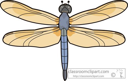 dragonflies_swift_long-winged_skimmer_dragonfly_726.jpg