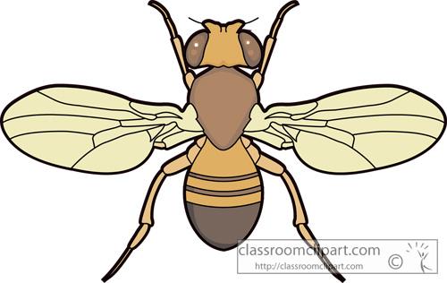 flies_fruitfly_726.jpg