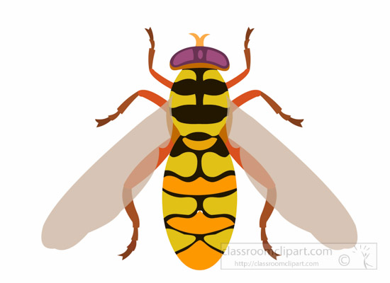 flower-fly-insect-clipart.jpg