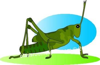 grasshopper_a.jpg