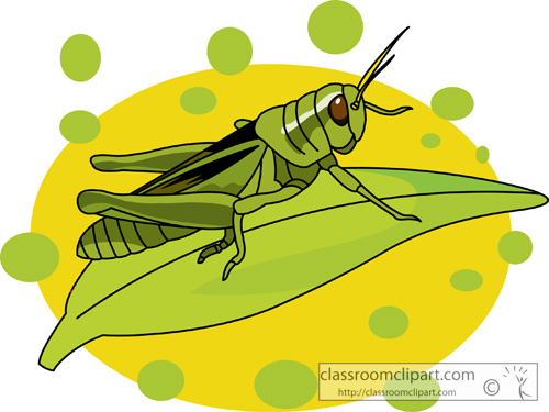 grasshopper_on_a_leaf_2.jpg