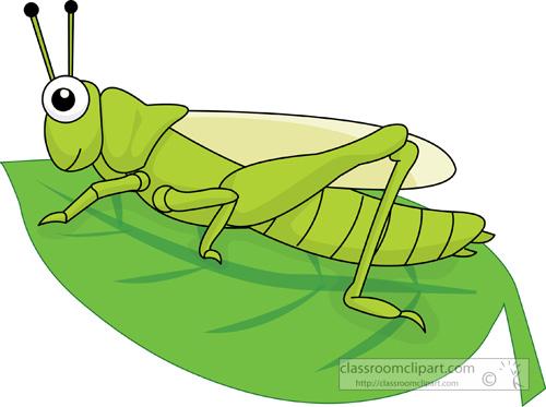 grasshopper_on_leaf_214.jpg