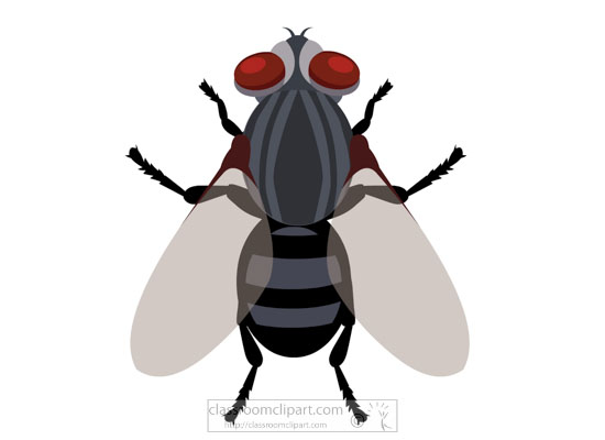 house-fly-insect-clipart-718.jpg
