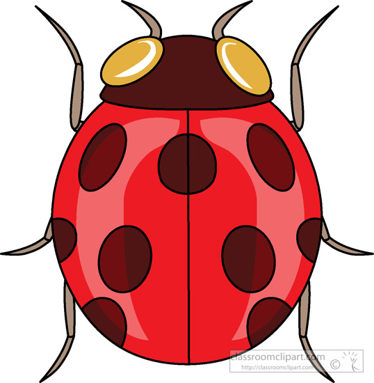 ladybug-insects-986.jpg