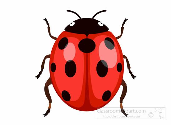 ladybug-ladybird-insect-clipart.jpg