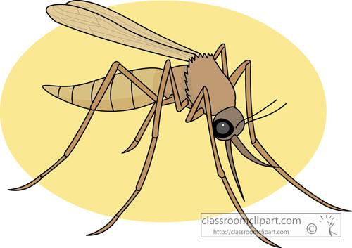 mosquito_728.jpg