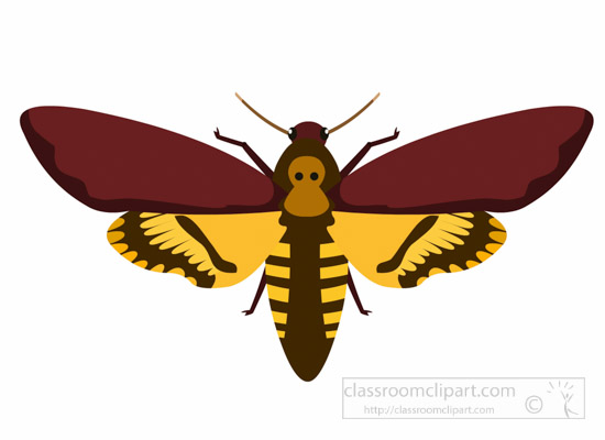 moth-insect-insect-clipart.jpg