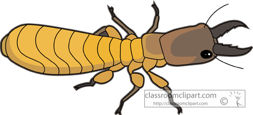 termite_728.jpg
