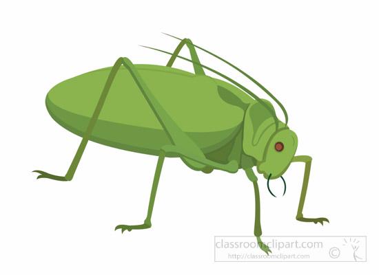true-katydid-insect-clipart-1695.jpg