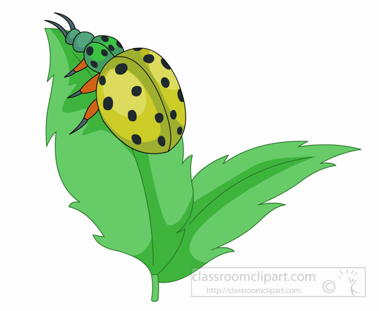 yellow-lady-bug-insect-on-leaf-clipart-126.jpg