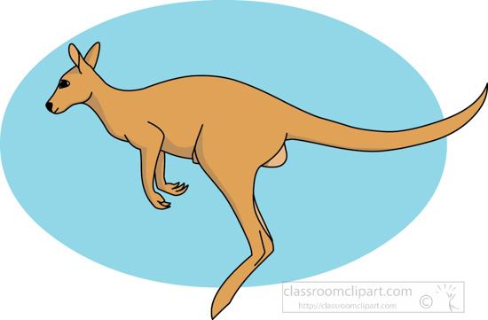 kangaroo_jumping_212_03.jpg
