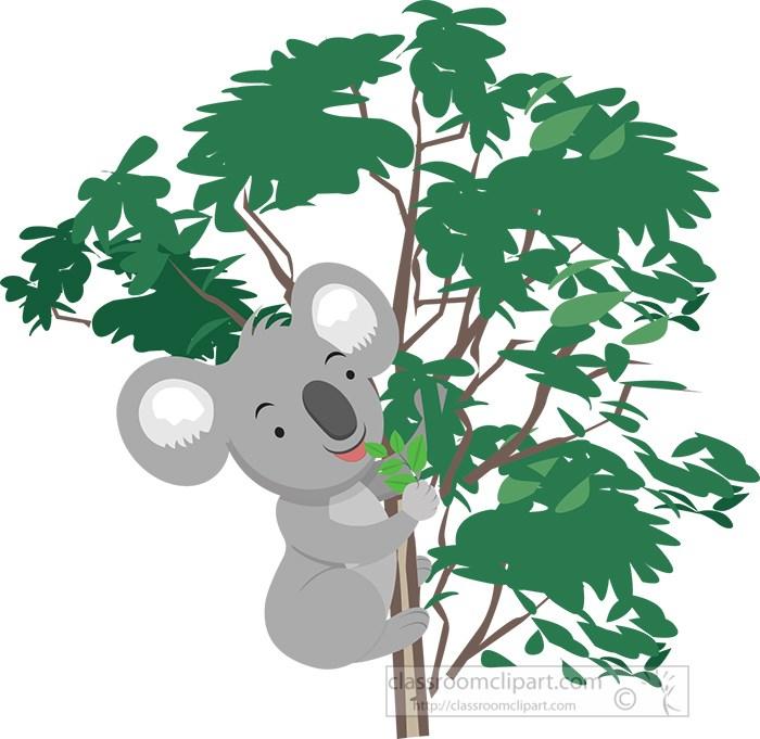 koala-bear-in-eucalyptus-tree.jpg