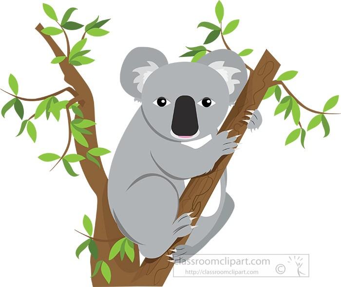 koala-sitting-between-tree-branches-vector-clipart.jpg