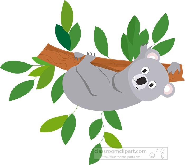 koala-upside-down-on-tree-branch.jpg