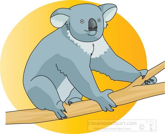 koala_bear_314_01B.jpg