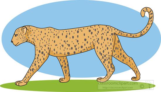 leopard_312_02A.jpg